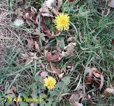 24 best native iowa plants images on pinterest native plants the iowa housewife