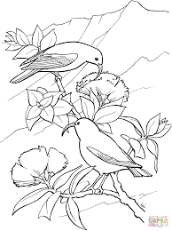 iiwi bird coloring page free printable coloring pages