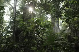 ecosystems u0026 biodiversity u2013 eia international