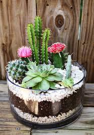 best 25 succulents in glass ideas on pinterest terrarium diy
