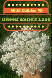 native edible plants 77 best food queen anne u0027s lace images on pinterest queen annes