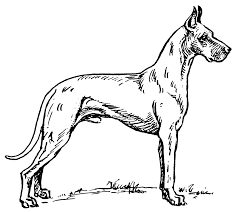 elegant great dane coloring pages 81 for free coloring kids with