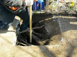 nyc water and sewer excavations near trees are regulated