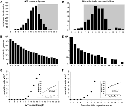 mutation rates spectra and genome wide distribution of