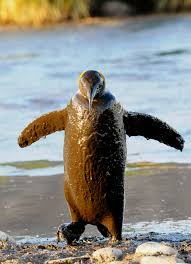 king penguins have been recorded to repeatedly dive to over 100