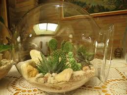 Desk Rock Garden Fabulous Succulent Cactus Plants Garden Tiny Terrarium Plants