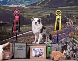 3 winds ranch australian shepherd fairoaksaustralianshepherds