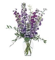 delphinium flowers delphinium dreams tf13 1 79 16