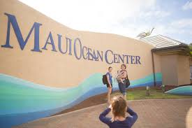 things to do on maui things to do on maui maui ocean center keao u0027s photography