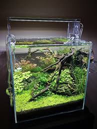 Aquascape Store 13 Jpg 960 1280 Bettas Pinterest Aquariums Fish Tanks And