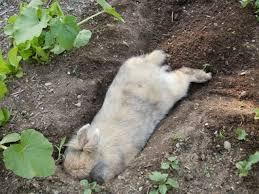 rabbit garden chapter 3 bunny in the garden the free range bunny