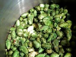 homebrewing how to grow hops at home serious eats