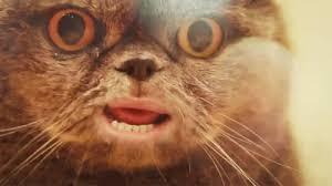 Talking Cat Meme - talking cat funny pictures