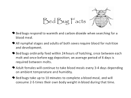 What Temperature Do Bed Bugs Die Bed Bugs In Schools