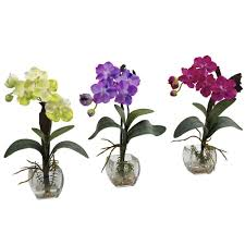 vanda orchid nearly mini vanda orchid arrangement set of 3 1312 s3
