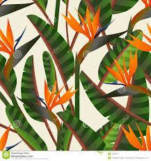 bird of the paradise flower pattern stock vector illustration of