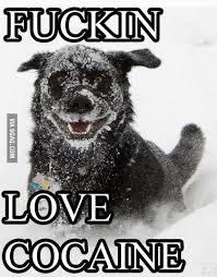So Much Cocaine Meme - deluxe so much cocaine meme so much 9gag kayak wallpaper