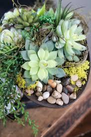 275 best garden succulents images on pinterest succulents