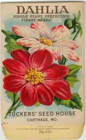 flower seed packets dahlia single perfection vintage flower seed packet