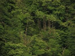 Georgian biodiversity database