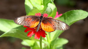 nigeria has a great variety of butterflies but not the world u0027s
