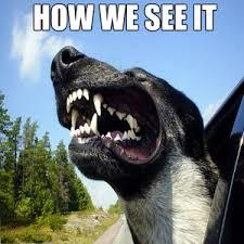 Dog In Car Meme - a dogs car trip by rayyzo meme center