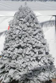 flocked christmas tree deerbrooke farm photo gallery premium christmas tree lot in las