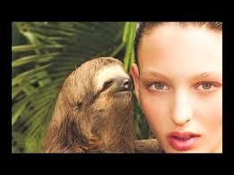 Sloth Whisper Meme - whispering sloth youtube