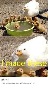 Meme Duck - 35 duck memes that will make you quack all day i can has