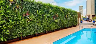 vertical garden friendly plants flower power