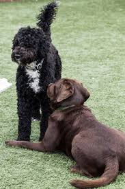 83 best pet health u0026 safety images on pinterest pet health