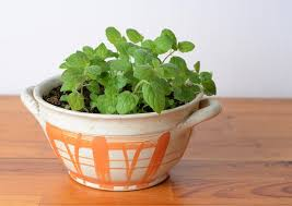 Indoor Herb Garden Kit The Best Indoor Herb Garden Kits Blooming Pods