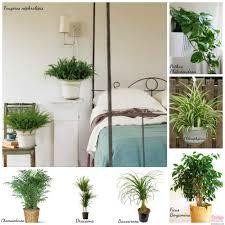 intérêt plantes depolluantes chambre à coucher photos de plantes