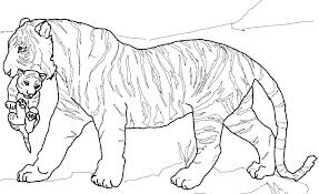 snow tiger coloring page coloring tiger eidolon info