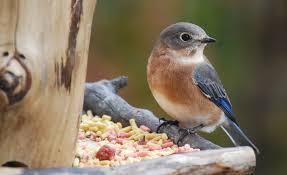 Birds In Your Backyard Feed The Birds In Your Summer Garden