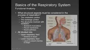 respiratory physiology explained examville quick review youtube