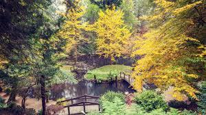 Frogmore Gardens Ballarat And The Melbourne International Flower Show With Deryn