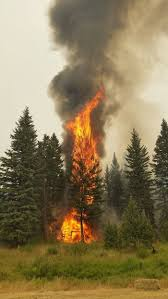 Alberta Wildfire Fitness Test by B C Wildfire Entire City And Area Of Williams Lake Ordered Evacuated