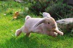 hopping bunny 108 best bunnies images on rabbit bunny rabbits