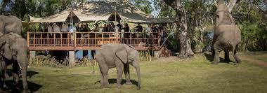 the elephant cafe elephant interaction