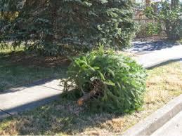 amazing tree disposal home depot part 12