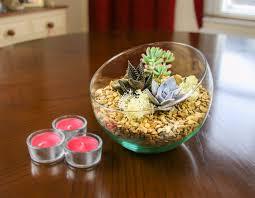 angled glass bowl terrarium kit with miniature succulent plants