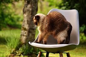 free picture nature grass cute chair furniture backyard