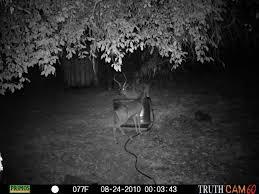 marin county backyard buck