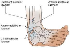Posterior Inferior Tibiofibular Ligament Examination Of Musculoskeletal Injuries 4th Edition Injury