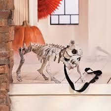 halloween skeleton dog dog skeleton scary halloween and