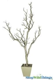 buy manzanita trees in pots for centerpieces chagne