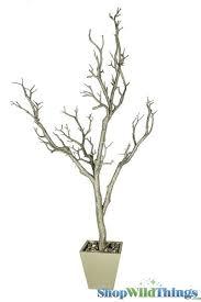 manzanita trees buy manzanita trees in pots for party centerpieces chagne