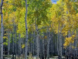 the gold belt full day colorado jeep tours