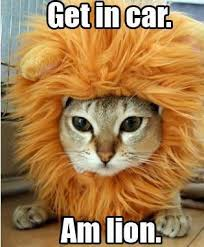 Jesus Cat Meme - image 11015 jesus christ it s a lion get in the car know
